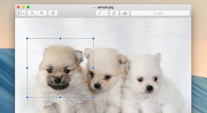 3匹のうち一番左の犬の上に点線の四角形を表示させる
